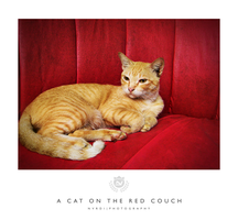 a cat on the red couch by nvrdi