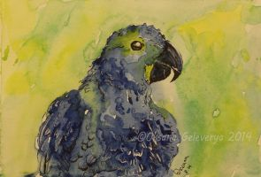 Watercolor and Ink #5 - Parrot by Oksana007