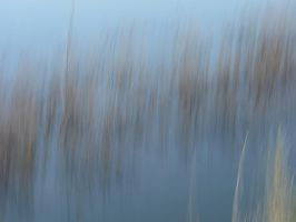 Water And Grass B by FiLH