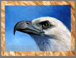 Sea eagle by markstewart