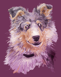 Sheltie by Lachtaube