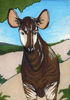 Okapi ATC by bruisedhound