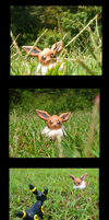 A wild Eevee appeared? by VengefulSpirits