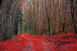 Red Pathway II by Aenea-Jones