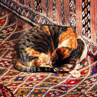 Tapestry Cat by michaelzer0
