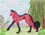 The wolf cat hybrid Uma by Eclipsedwolf