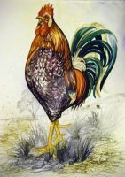 Rooster Breaks Over by HouseofChabrier