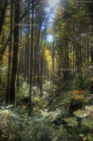 Deep Forest by Vlue