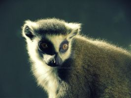Lemur by HorrificSensation