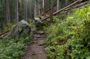 Humphreys Trail by amzimme