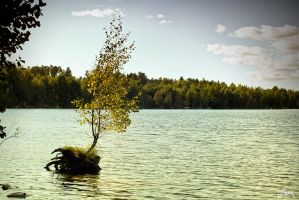 a Tree on The Water by Carnaga