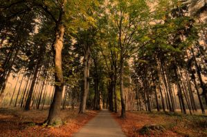 Silent Woods by tomsumartin