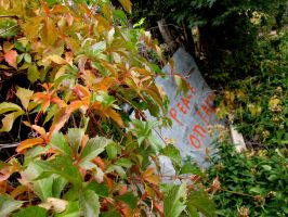 Virginia Creeper on Peace Sign by DVanDyk