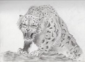 Snow Leopard by CDrice