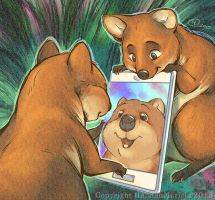 Quokka Selfie by HannahMericle