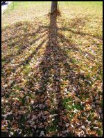 Shadow of Naked Tree by lepizzagirl