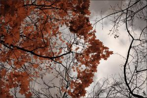 Autumn covers me by Elipa