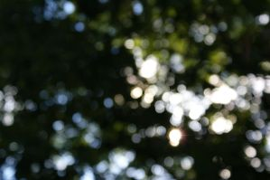 Sunlight Bokeh 1 by MLStock
