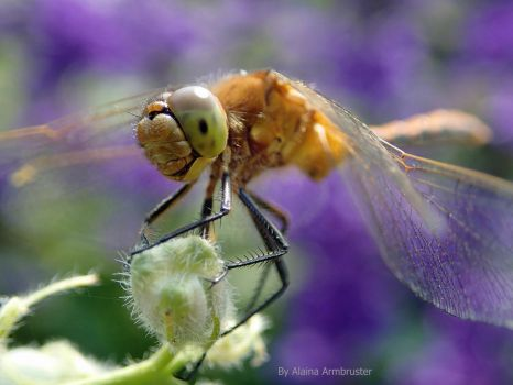 Dragonfly Smiles by AlainaLee