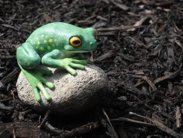 Tree Frog by Eryrb