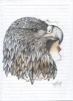 Eagle Drawing by Subtlejewel3020