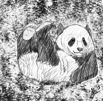 A Panda Chilling out. by jornas