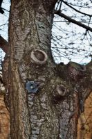 Gnarly Bark Texture 03 by Fea-Fanuilos-Stock