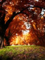 the chestnut alley by Ditze