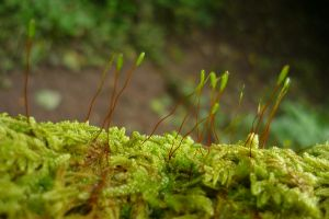Moss Stems by Embrace-The-Night
