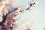 pink by odpium
