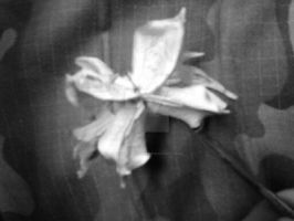 A Dried Flower Hidden Among Camouflage by TheFatalLover