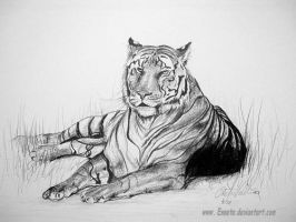 Tiger by Ennete