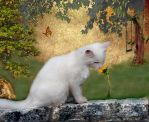 Remembering August by LindArtz