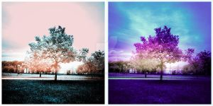 IR - When A Tree Goes Violet by darkaion