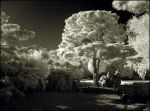 Puschel Tree Infrared II.. by MichiLauke