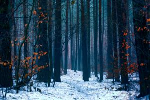 winter forest by cienwemgle