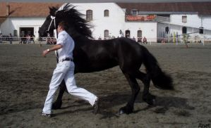 Frieasian horse show III. by Ennete