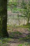 Woodland stock.. by Alz-Stock-and-Art
