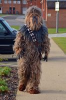 Stoke-Con-Trent 2014 (14) Chewbacca by masimage