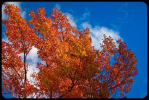Here comes fall by sillverrfoxx