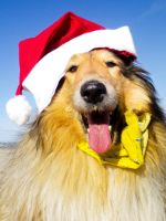 xmas dogs in hats by hermio
