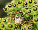 Spot the Snail. by bared