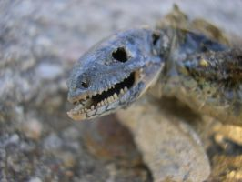 Reptile by michael160693