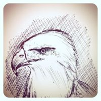 Eagle Doodle by Mazdi