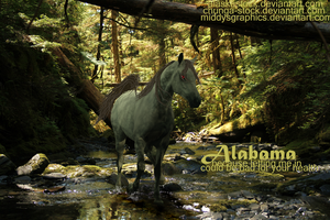 ALABAMA: GIFT by MiddysGraphics