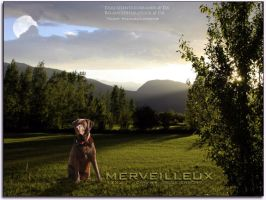 merveilleux by oceancoralgraphics