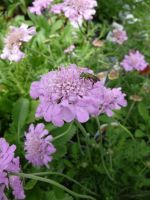 Bug and Flower Stock 1 by Melyssah6-Stock