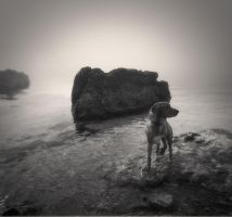 dog,water... by denis2