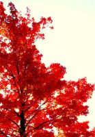 Fall colors by pouringliketherain
