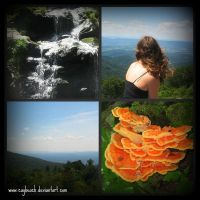 Skyline Drive Collage by caybeach
